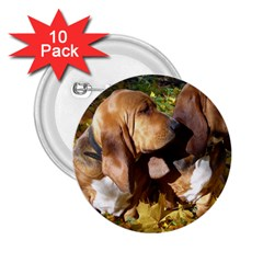2 Bassets 2.25  Buttons (10 pack)