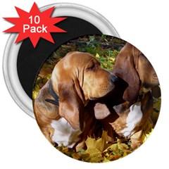2 Bassets 3  Magnets (10 pack)