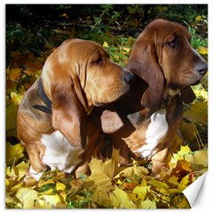 2 Bassets Canvas 20  x 20