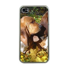 2 Bassets Apple iPhone 4 Case (Clear)