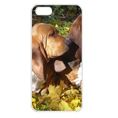 2 Bassets Apple iPhone 5 Seamless Case (White)