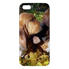 2 Bassets Apple iPhone 5 Premium Hardshell Case