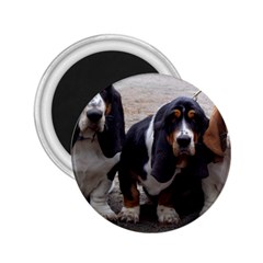 3 Basset Hound Puppies 2.25  Magnets