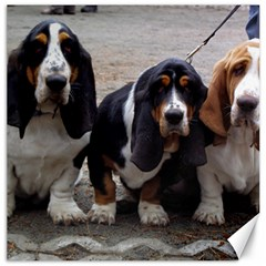 3 Basset Hound Puppies Canvas 16  x 16