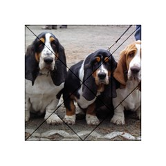 3 Basset Hound Puppies Acrylic Tangram Puzzle (4  x 4 )