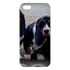 3 Basset Hound Puppies Apple iPhone 5 Premium Hardshell Case