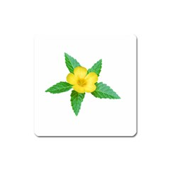 Yellow Flower With Leaves Photo Square Magnet