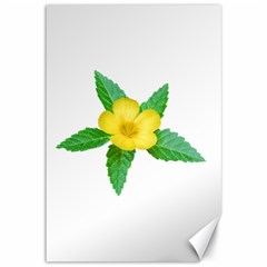 Yellow Flower With Leaves Photo Canvas 12  X 18