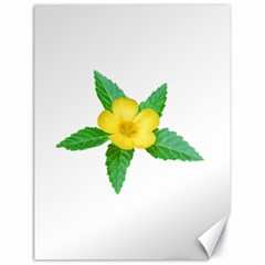 Yellow Flower With Leaves Photo Canvas 18  X 24
