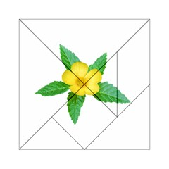 Yellow Flower With Leaves Photo Acrylic Tangram Puzzle (6  X 6 )