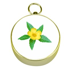 Yellow Flower With Leaves Photo Gold Compasses