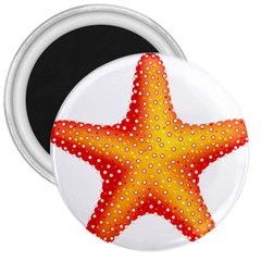 Starfish 3  Magnets