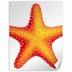 Starfish Canvas 18  X 24