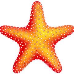 Starfish Magic Photo Cubes