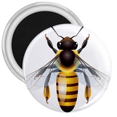 Bee 3  Magnets