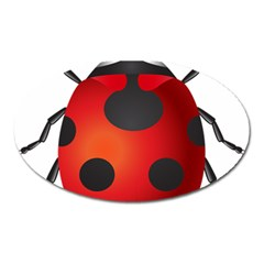 Ladybug Insects Oval Magnet