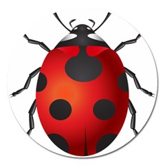 Ladybug Insects Magnet 5  (round)
