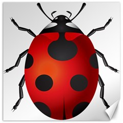Ladybug Insects Canvas 12  X 12