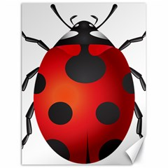 Ladybug Insects Canvas 18  X 24