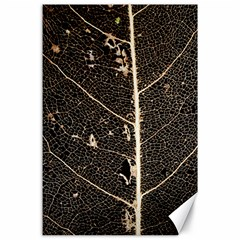 Vein Skeleton Of Leaf Canvas 24  X 36