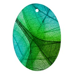 Sunlight Filtering Through Transparent Leaves Green Blue Ornament (oval)