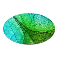 Sunlight Filtering Through Transparent Leaves Green Blue Oval Magnet