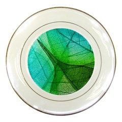 Sunlight Filtering Through Transparent Leaves Green Blue Porcelain Plates