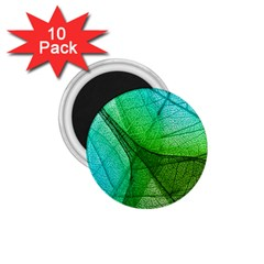 Sunlight Filtering Through Transparent Leaves Green Blue 1 75  Magnets (10 Pack)