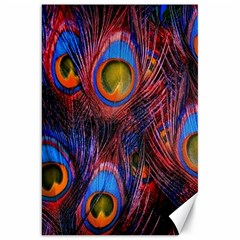 Pretty Peacock Feather Canvas 20  X 30