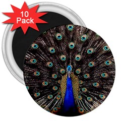Peacock 3  Magnets (10 Pack)
