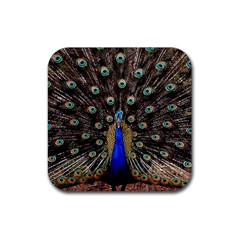 Peacock Rubber Square Coaster (4 Pack)