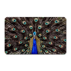 Peacock Magnet (rectangular)