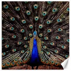 Peacock Canvas 12  X 12