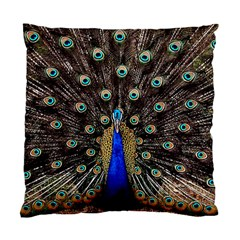 Peacock Standard Cushion Case (two Sides)