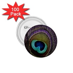 Peacock Feather 1 75  Buttons (100 Pack)