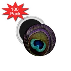 Peacock Feather 1 75  Magnets (100 Pack)