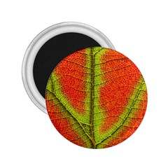Nature Leaves 2 25  Magnets