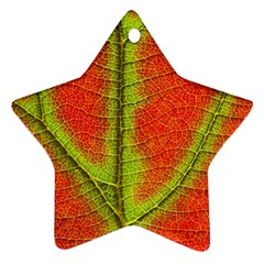 Nature Leaves Ornament (star)