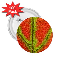 Nature Leaves 2 25  Buttons (100 Pack)