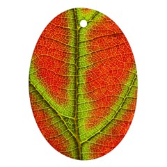 Nature Leaves Oval Ornament (two Sides)