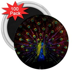 Beautiful Peacock Feather 3  Magnets (100 Pack)