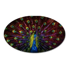 Beautiful Peacock Feather Oval Magnet