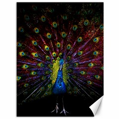 Beautiful Peacock Feather Canvas 36  X 48