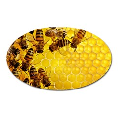 Honey Honeycomb Oval Magnet