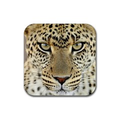 Leopard Face Rubber Square Coaster (4 Pack)