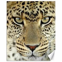 Leopard Face Canvas 11  X 14