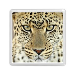Leopard Face Memory Card Reader (square)