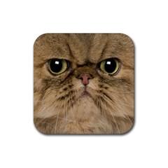 Cute Persian Catface In Closeup Rubber Square Coaster (4 Pack)