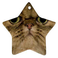 Cute Persian Catface In Closeup Star Ornament (two Sides)