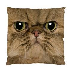 Cute Persian Catface In Closeup Standard Cushion Case (one Side)